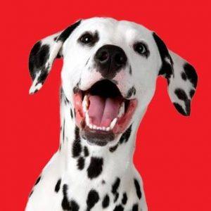 Maxi Pet